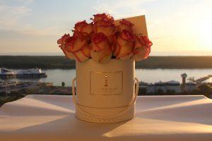 rozes dezuteje