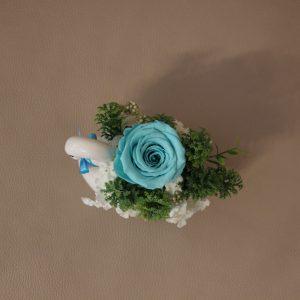Mieganti mėtinė rožė gulbėje