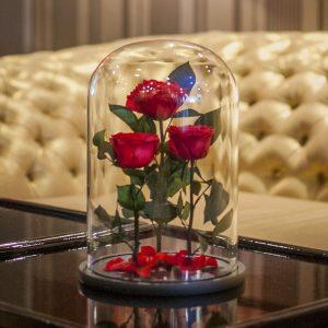 miegancios raudonos rozes po kupolu