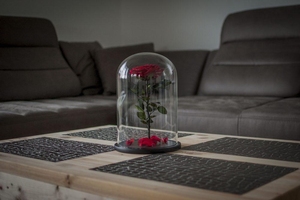 mieganti raudona roze po kupolu