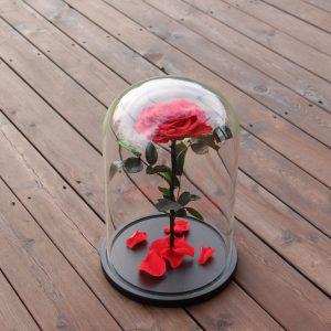 Mieganti rožė po kupolu