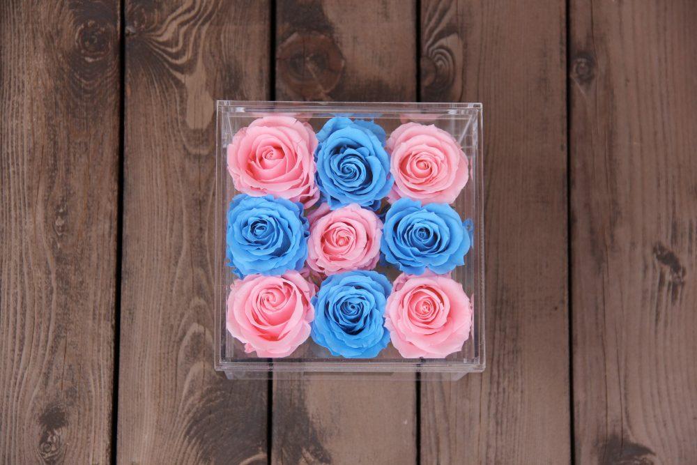 Šviesiai rausvos ir mėlynos miegančios rožės