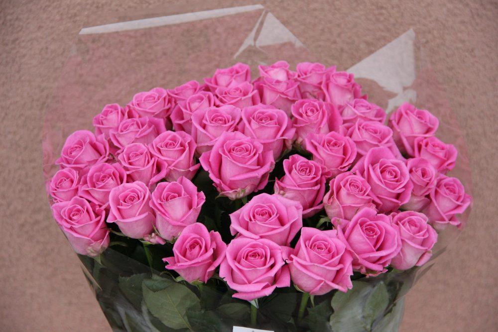 aqua rozes